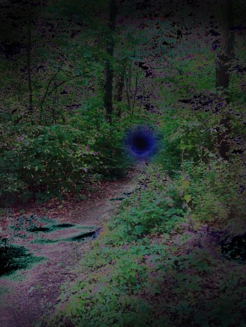 A dark trail through the woods (at Camp Warren Levis)
