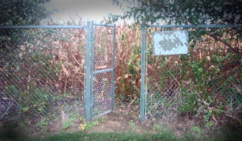 Open gate facing a corn field