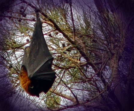 Fruit bat hanging from a tree