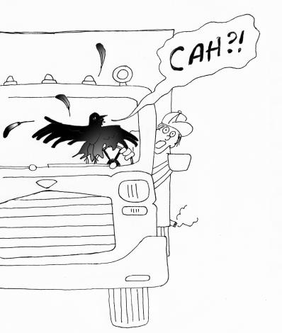 "Crow cries ""Cah?!"""